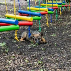 Веревочный парк для детского центра